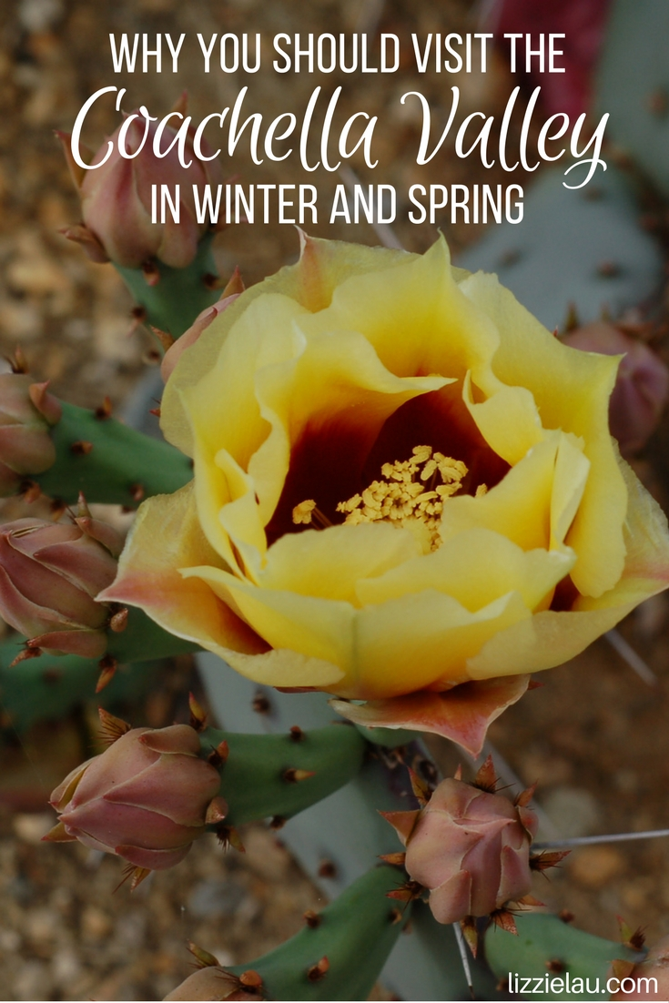 Why You Should Visit the Coachella Valley in Winter and Spring