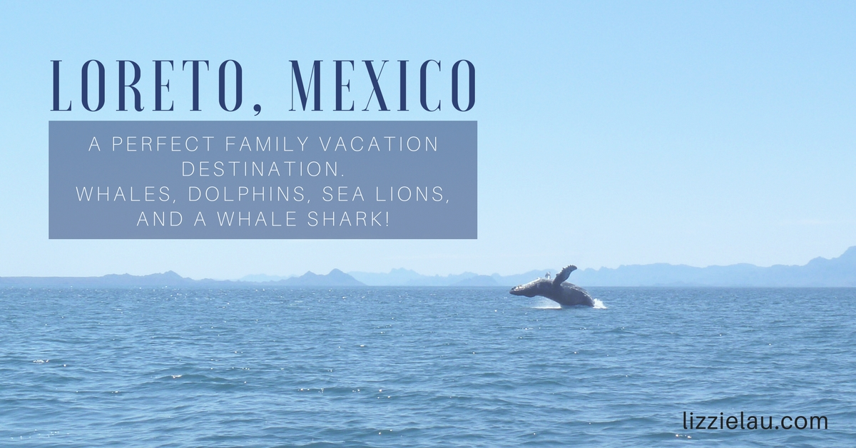 Loreto Mexico A PERFECT FAMILY VACATION DESTINATION Whales Dolphins Sea Lions and a Whale Shark