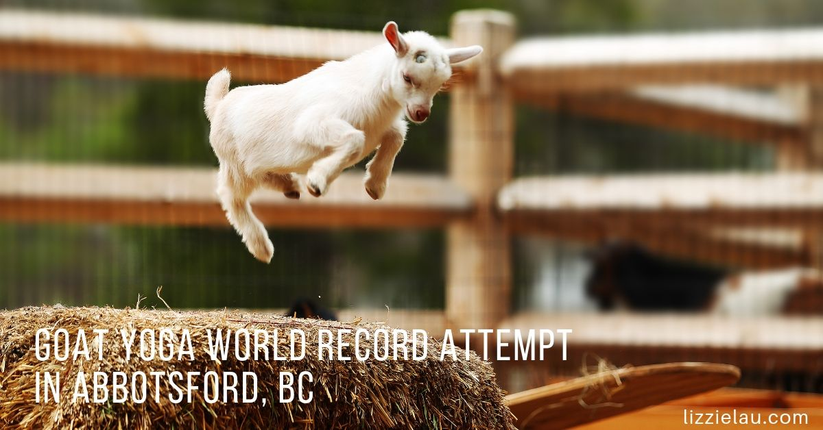 Goat Yoga World Record Attempt in Abbotsford, BC