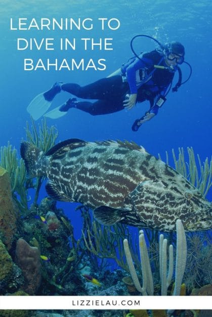 Are you looking for someplace to get SCUBA certified? I recommend learning to dive in the Bahamas because of the gorgeous reefs and excellent conditions. #thebahamas #travel