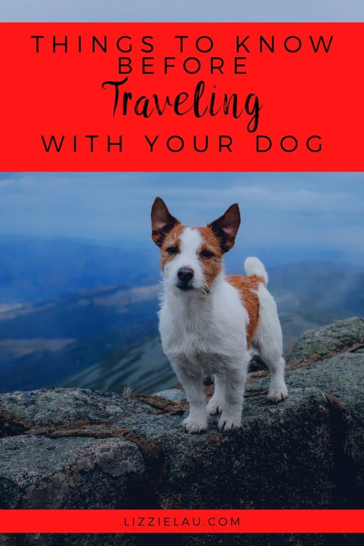 Vital Things to know before traveling with a Dog