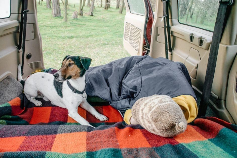 traveling with a Dog in a van