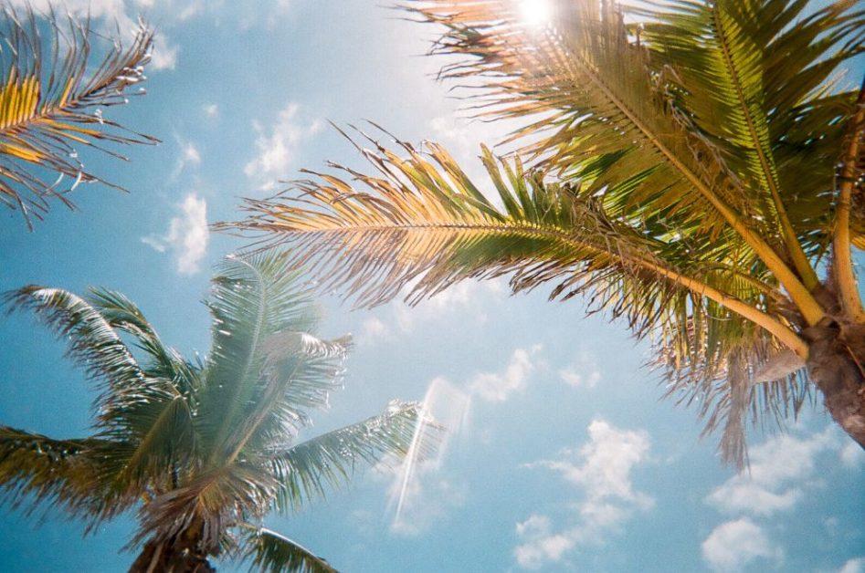 Florida road trip - looking up at palm trees